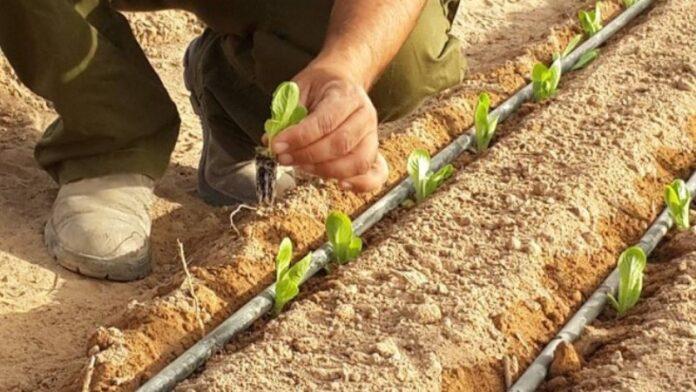 Israel entrega sistemas de riego por goteo para pequeños agricultores paraguayos