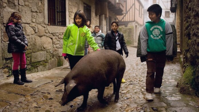 La historia judía secreta del cerdo más famoso de España