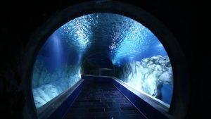 El primer acuario de Israel en Jerusalén