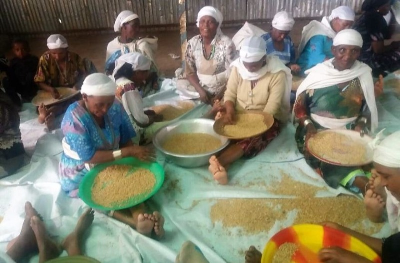 Judíos etíopes