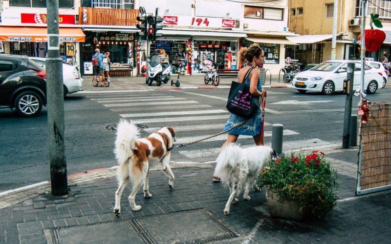 mujer paseando perros en Tel Aviv.