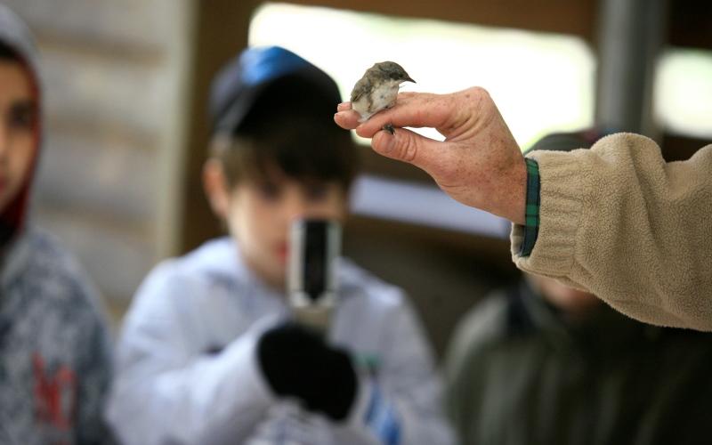 Observatorio de Aves de Jerusalén