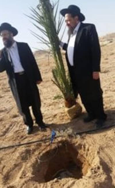 El sanedrín obtiene autorización para usar sus árboles para el tercer templo