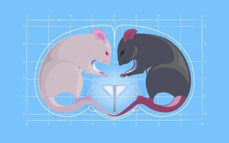 La oxitocina, la 'hormona del amor' también causa un comportamiento agresivo, según científicos israelíes