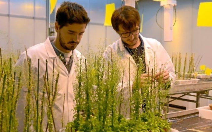 Investigadores israelíes descubren cómo se pueden usar las plantas como recurso energético