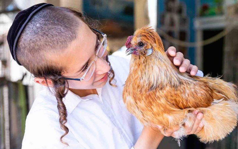 La terapia con mascotas hace maravillas en la yeshivá israelí para necesidades especiales