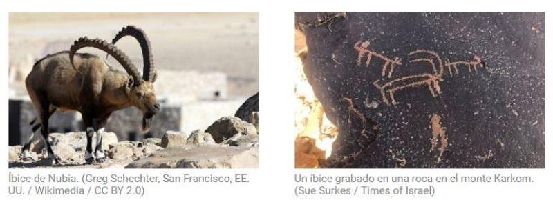 Grabados de rocas antiguas en la remota meseta del Negev evocan la Biblia y atraen un nuevo interés
