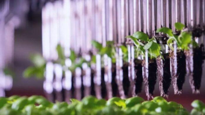 Granja vertical produce productos Kosher certificados sin insectos