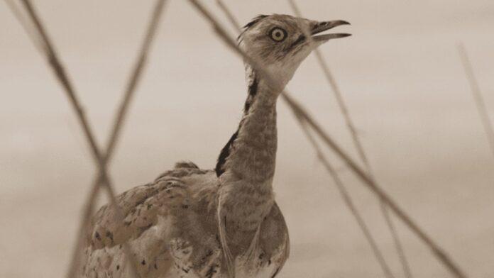 Los acuerdos de Abraham están salvando especies en peligro de extinción en el medio oriente
