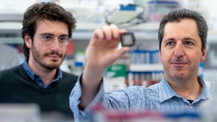 Investigadores israelíes inventan una forma de probar fármacos sin animales