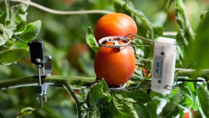Mitsubishi se une al brazo de inversiones israelí para buscar tecnología alimentaria y agrícola