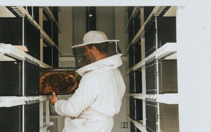 Una startup israelí de inteligencia artificial apuesta por las colmenas robóticas para salvar las poblaciones mundiales de abejas